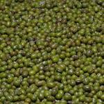 绿豆[图]